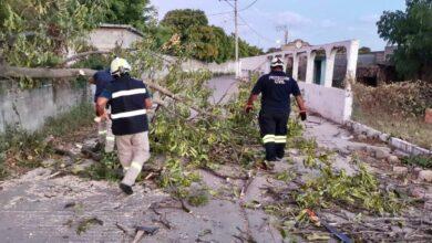 Photo of Prevención de riesgos por caída de árboles por el norte, implementa Protección Civil de Juchitán